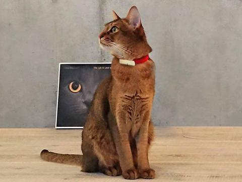 走る/食べる/寝るなど、猫の健康管理ができる首輪型ウェアラブルデバイス