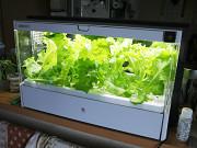 [家電製品ミニレビュー] ユーイング「水耕栽培 Green Farm」 ~レタスも育つ! ゲーム感覚で野菜を収穫してみた